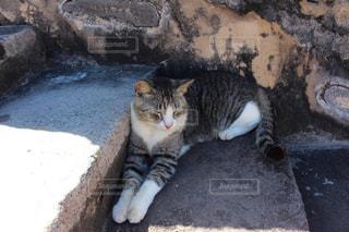 階段に横になっている猫の写真・画像素材[1811308]