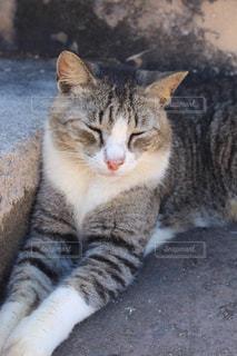 地面に横になっている猫の写真・画像素材[1811309]