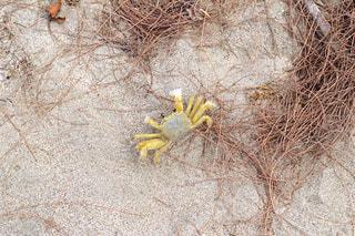 ビーチで遭遇したカニの写真・画像素材[1814048]