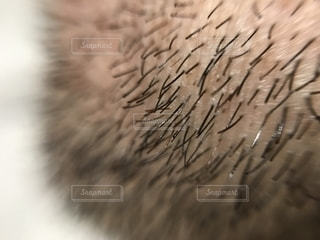 男性の髭アップの写真・画像素材[2081514]
