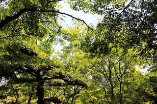 栗林公園の緑の写真・画像素材[2087965]