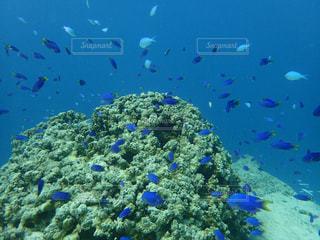サンゴ礁と魚の群れの写真・画像素材[2306439]