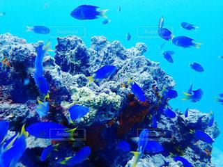 青い魚とサンゴ礁の写真・画像素材[2422205]