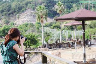 キリンの写真を撮る女性の写真・画像素材[2764451]