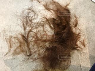 ヘアカット後の髪の毛の写真・画像素材[3364661]