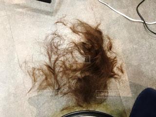 ヘアカット後の髪の毛の写真・画像素材[3364663]
