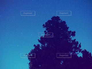 夜の杉の木の写真・画像素材[2065003]