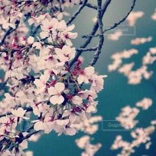 春の写真・画像素材[71627]