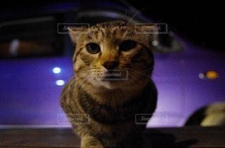 猫の写真・画像素材[71629]