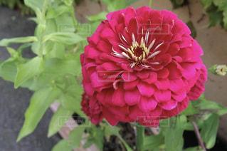 花の写真・画像素材[1346665]