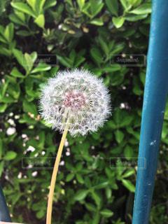 近くの植物のアップの写真・画像素材[1352302]