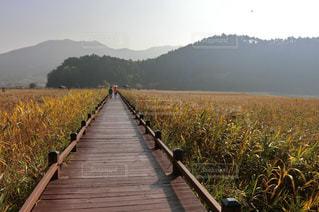 韓国順天湾湿地の写真・画像素材[1355663]