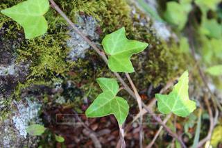 緑の植物の写真・画像素材[1358438]