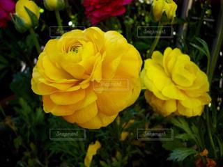 花のアップの写真・画像素材[1365993]