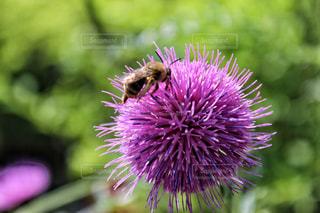 近くに紫の花のアップの写真・画像素材[1373946]