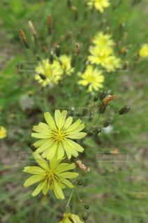 花のアップの写真・画像素材[1422247]