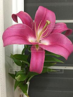 植物にピンクの花の写真・画像素材[1467095]