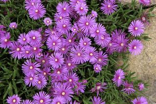花の写真・画像素材[1469313]
