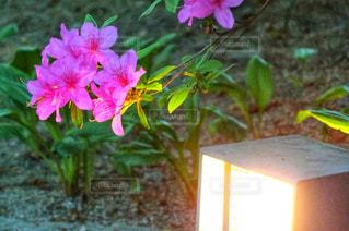 近くの花のアップの写真・画像素材[2082141]