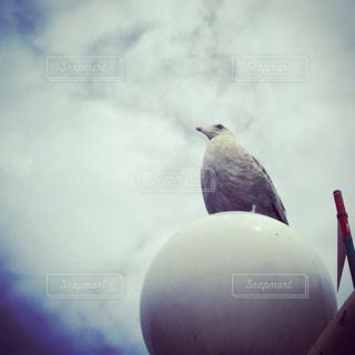 鳥の写真・画像素材[1346270]
