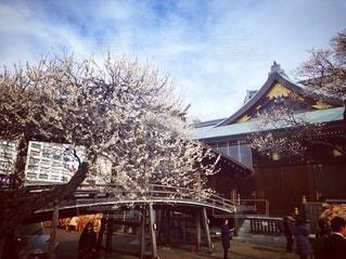 神社の梅の写真・画像素材[2736403]