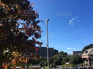 秋の空の写真・画像素材[1342532]