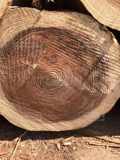 杉の丸太の写真・画像素材[2241579]