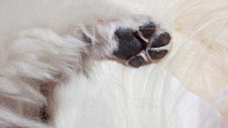 犬の肉球の写真・画像素材[1345005]