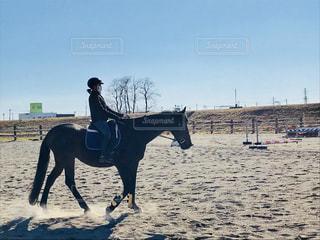 馬の写真・画像素材[1349681]