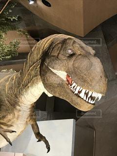そのトランクを持つ恐竜の写真・画像素材[1356946]