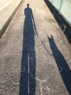 犬の写真・画像素材[1343383]