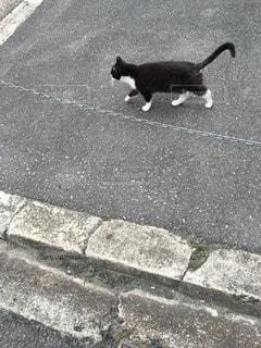 猫三昧の写真・画像素材[42393]