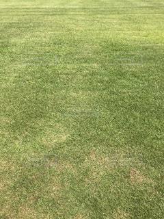 芝生の写真・画像素材[1344044]