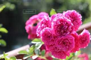 花の写真・画像素材[1343709]