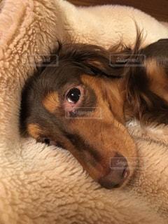 犬の写真・画像素材[134940]