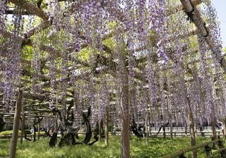 春の写真・画像素材[360049]