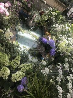 紫陽花の写真・画像素材[1344512]