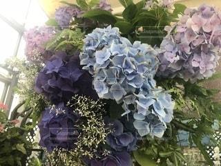紫陽花の写真・画像素材[1344513]