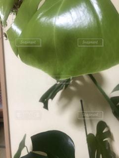 葉っぱの雫の写真・画像素材[1503489]