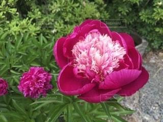 お花の写真・画像素材[2210202]