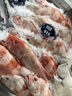 鮮やかな魚の写真・画像素材[1344458]