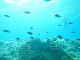 海の水中の景色の写真・画像素材[1357545]