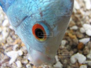 近くに魚のアップの写真・画像素材[1381765]