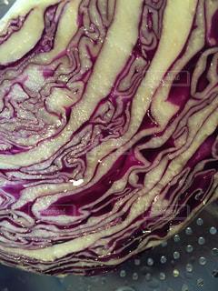 紫キャベツの写真・画像素材[1774224]