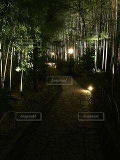 夜の竹林の写真・画像素材[1347302]