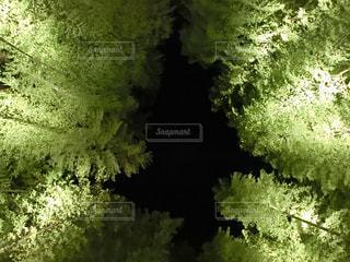 見上げる夜の竹林の写真・画像素材[1358595]