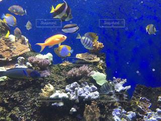 きれいな魚たちの写真・画像素材[1370926]