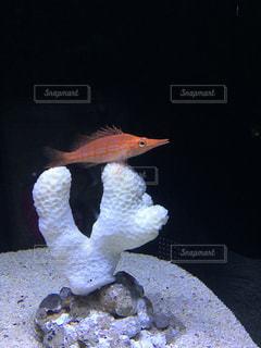 サンゴに乗った赤い魚の写真・画像素材[1380224]
