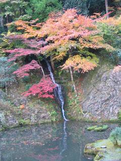 木々 に囲まれた滝の写真・画像素材[1362273]