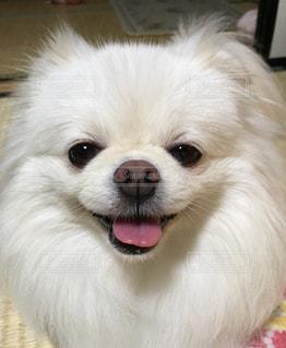 微笑みの写真・画像素材[1363568]